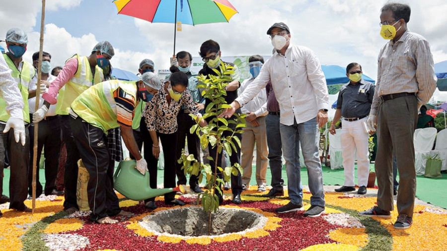 A sapling being planted in DG Block on Saturday to mark the  start of the plantation drive