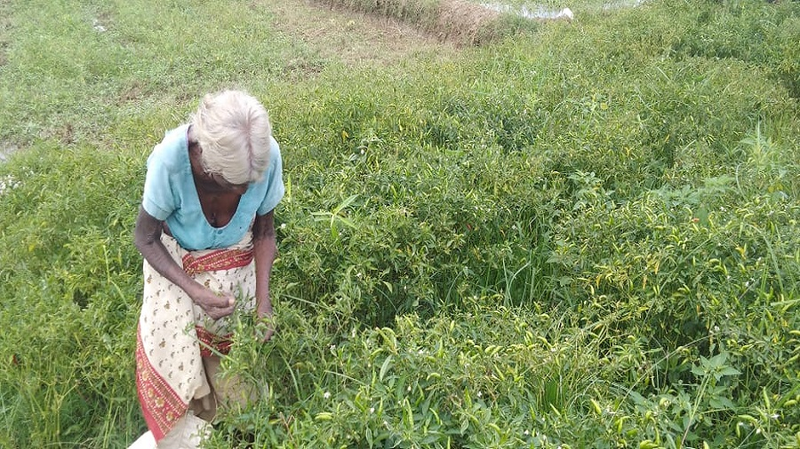 An aged tribal woman selling saag in Jharkhand's Mandar village