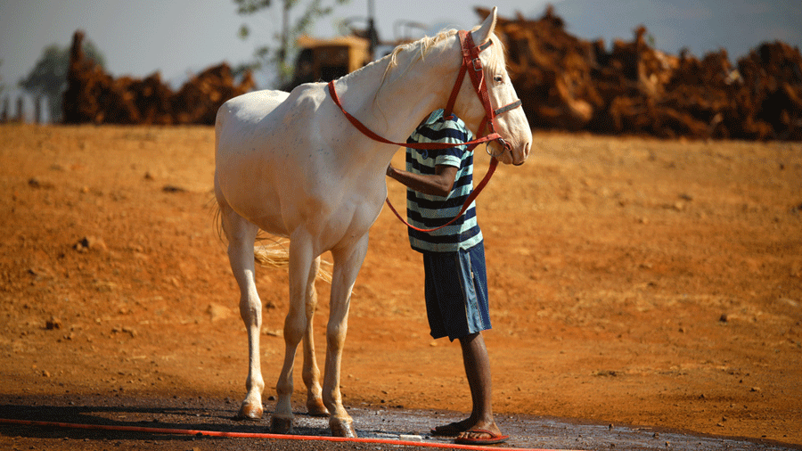 Horses began to be domesticated around 4000 BC as is known from the study of genetic material