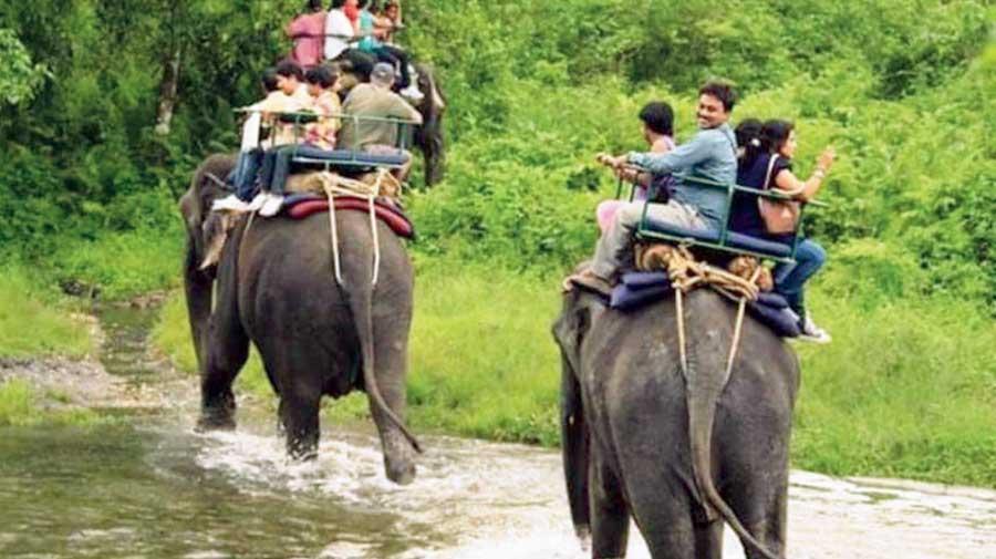Elephant safaris in the Jaldapara National Park.