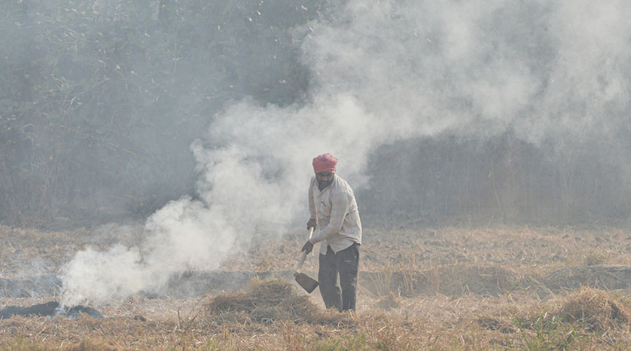 A farmer burns paddy stubble in a field, on the outskirts of Mohali, Friday, November 6, 2020.