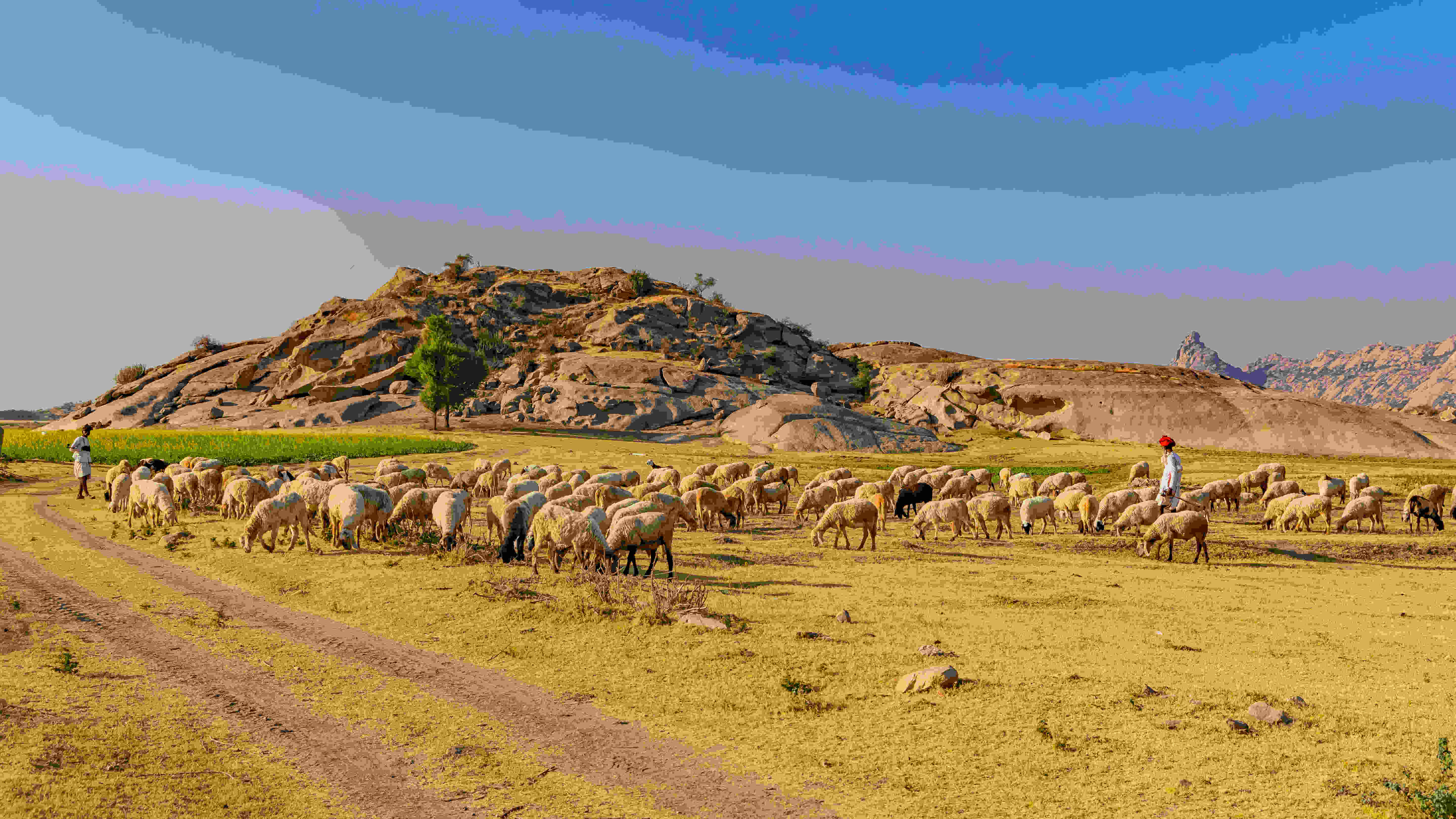 In India, pastoralists are estimated to number 13 million, forming 1 per cent of the total population.