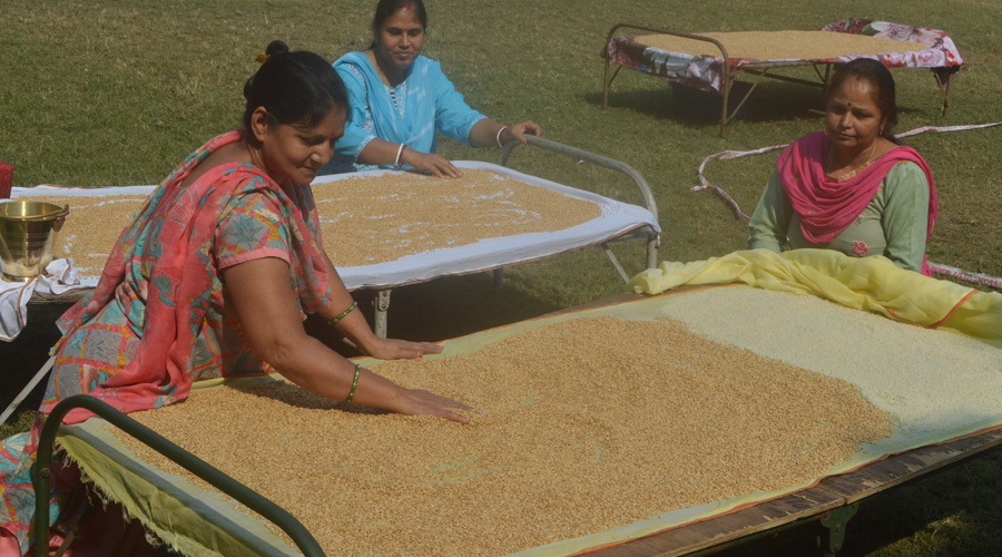 Women devotees drying wheat at Agrico in Jamshedpur on Tuesday.