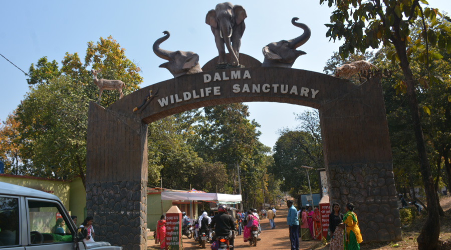 Dalma Wildlife Sanctuary is located 10 km from the city of Jamshedpur.