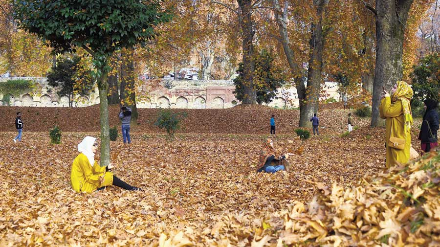 Visitors at a garden filled with fallen chinar leaves in Srinagar on  Tuesday.