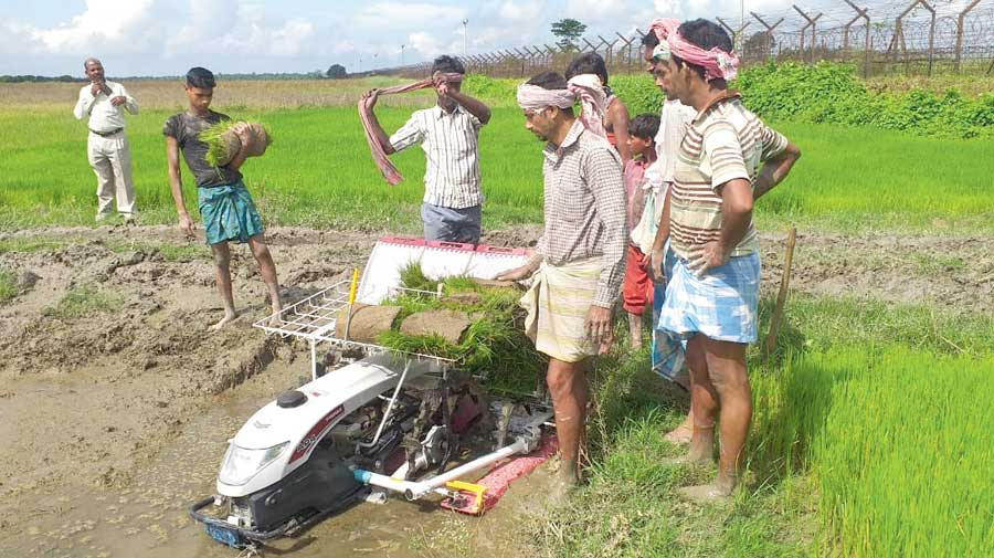 A machine for paddy planting