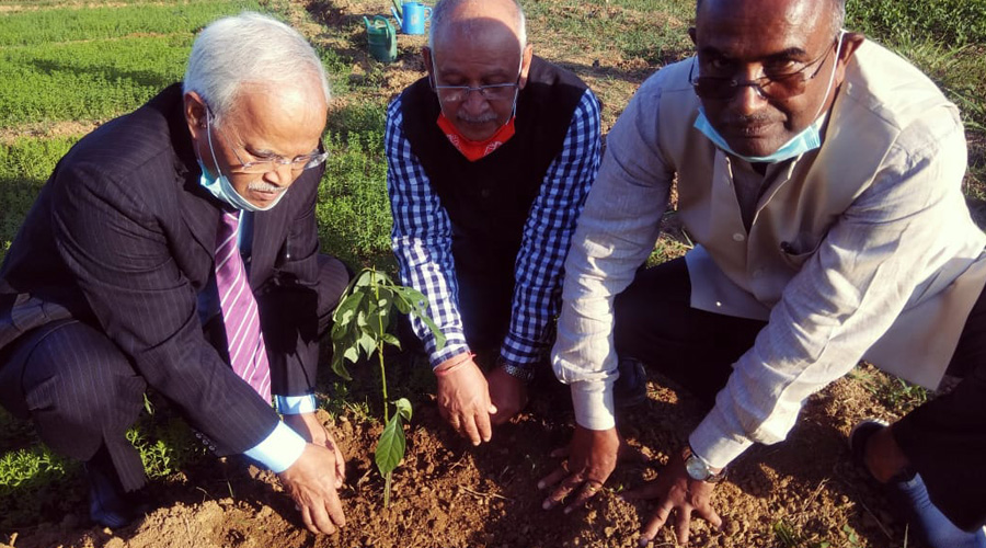 BAU Vice Chancellor Dr O.N. Singh, Ranchi University Vice Chancellor Dr Ramesh Pandey and Chairman of the BAU horticulture department Dr K.K. Jha planting avocado seeds on BAU campus in Ranchi.