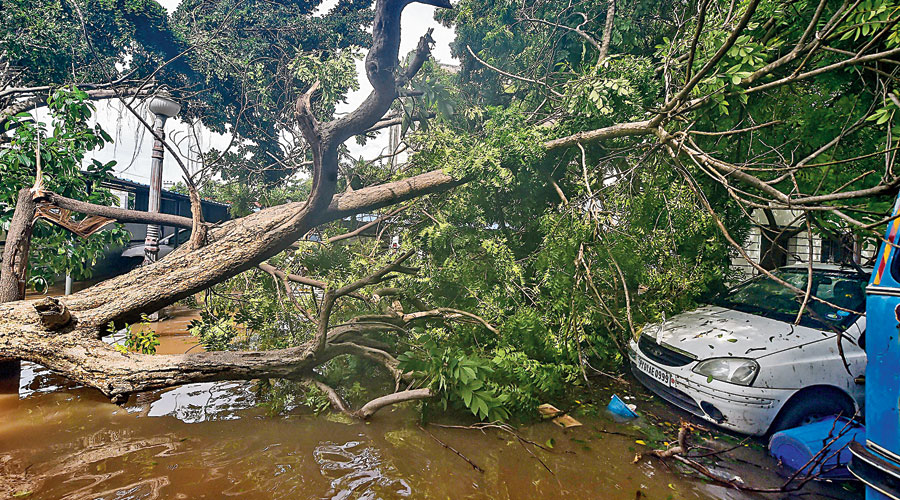 A car under an uprooted tree in Puducherry on Thursday.