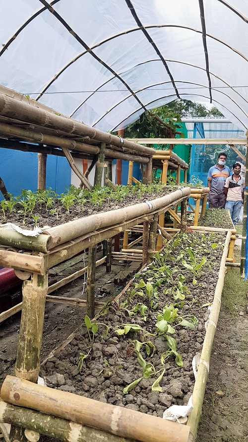 A kitchen garden which will produce spinach, broccoli, cabbage, lettuce etc on tiered bamboo shelves