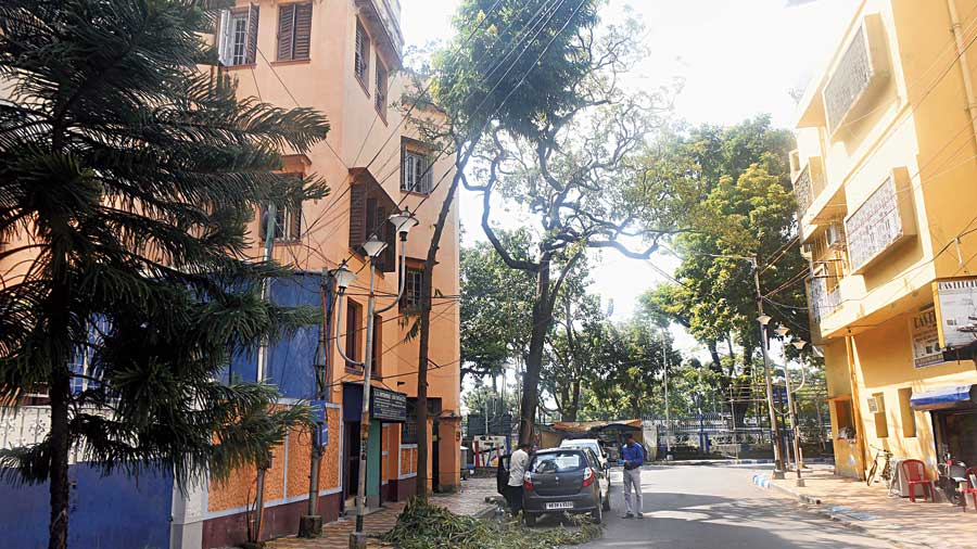 The foliage towards the side of the buildings have not been trimmed in the lane to the east of Deshapriya Park's boundary. One of the trees is already tilted towards the road. Heavy and gusty winds can uproot the tree.