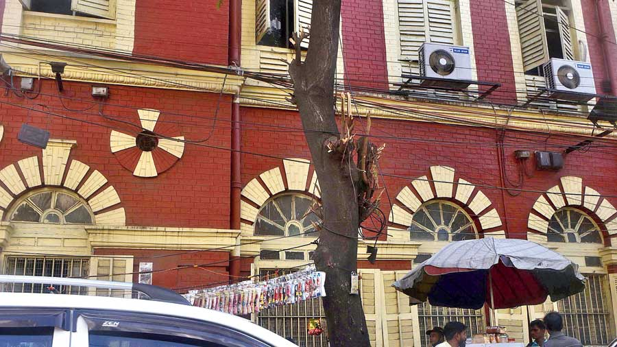 The branches close to the road in front of the CMC headquarters on SN Banerjee Road have been completely chopped, leaving nothing. The growth towards the top has been left untouched. This will distort the balance of the tree