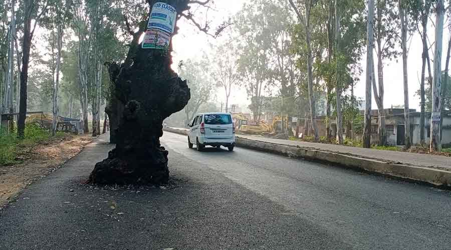 A tree on GT road in Hazaribagh.