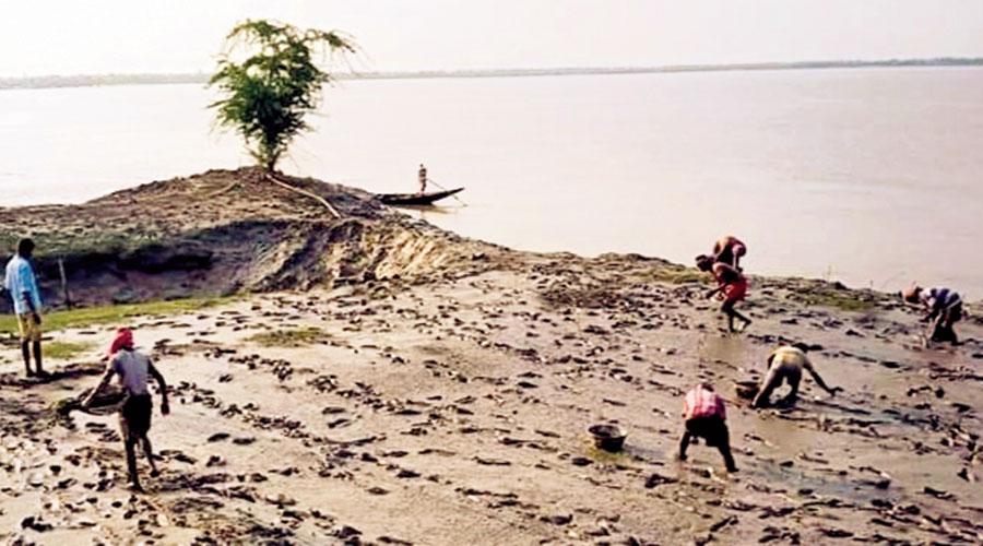 Volunteers plant saplings at the Rupmari-Berer Chak area of Hingalganj in North 24-Parganas, part of the Sunderbans mangroves damaged by Amphan.