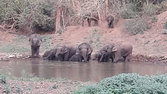 An elephant herd in Chakulia forest range.