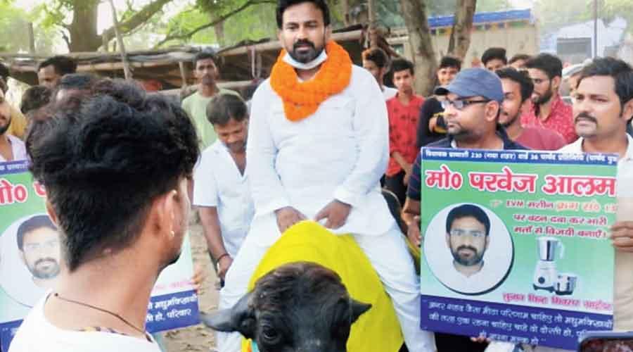Muhammad Perwez Mansuri rides a buffalo while campaigning in Gaya on Monday