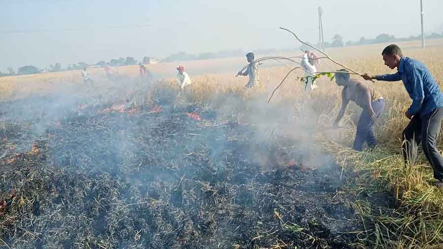 Villagers try to douse the flames in a paddy field in Barkagaon, Hazaribagh on October 30, 2020.