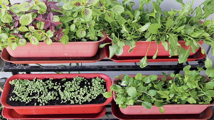 To start growing you would require appropriate pots, seeds, good quality soil and a watering can in case of outdoors
