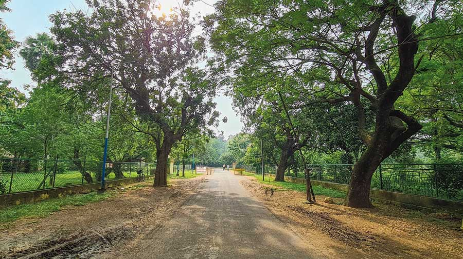 The road that runs past the Upasana Griha in Santiniketan.