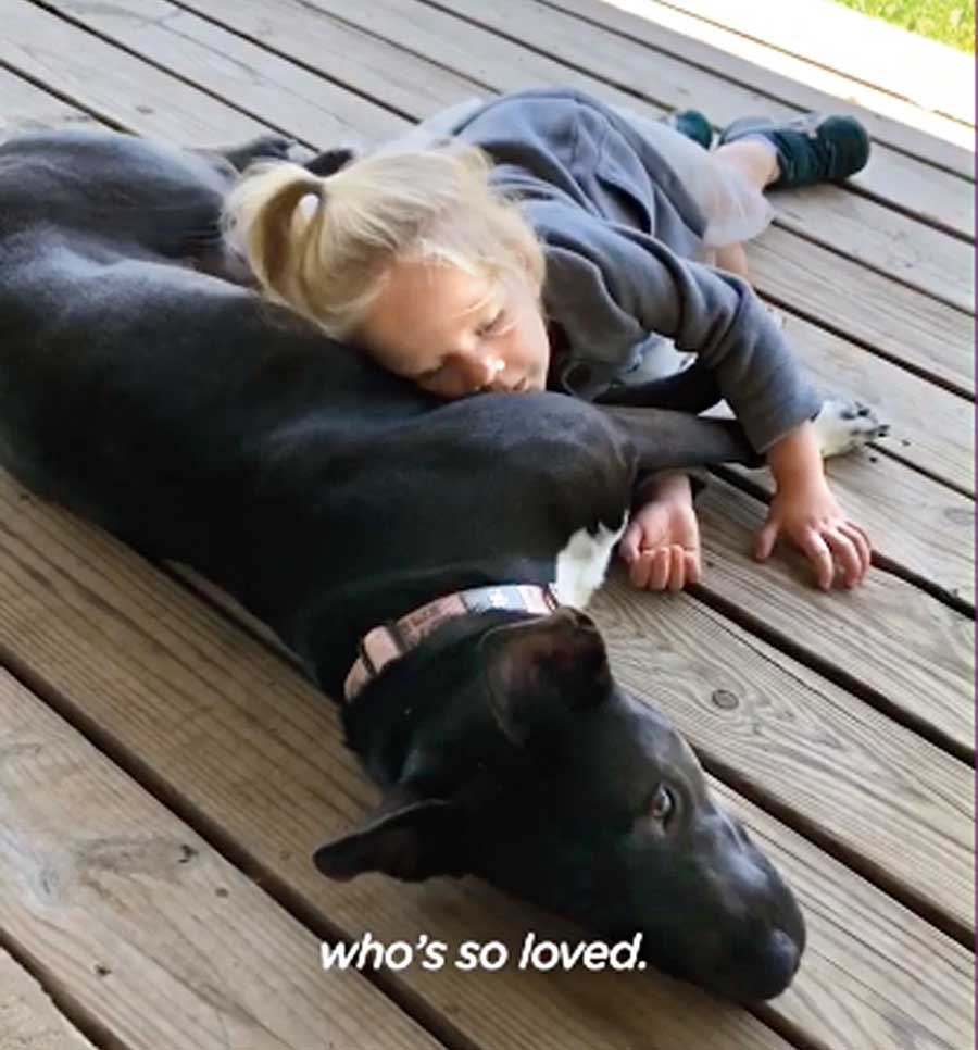 @thedodo: This little girl's friendship with her pittie is the purest thing ever. This little girl loves to read to her pit bull — and count her nipples  — @realhappydogs, adopted/fostered through @wiregrassanimalgroup along with their foster pup Jones, now @thepinebarrenpups