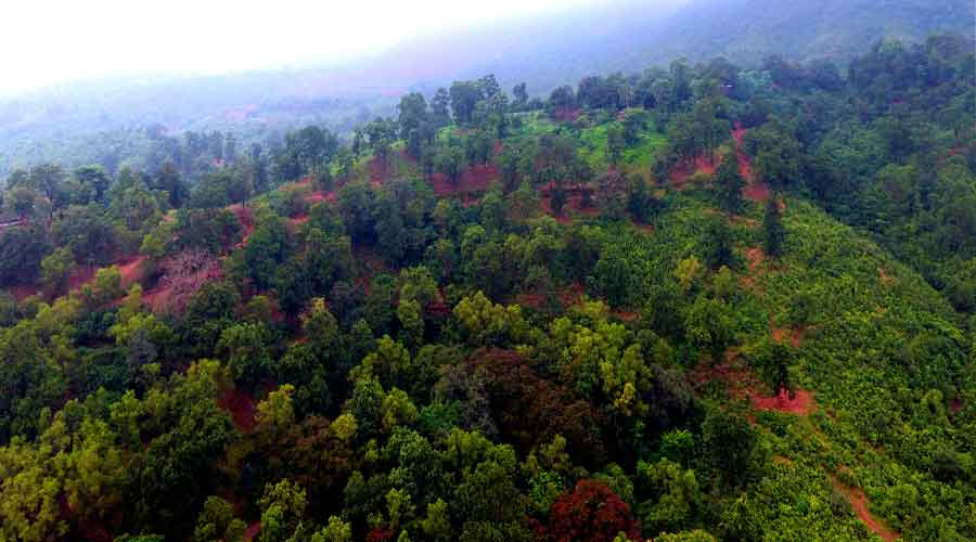 The Sasangada forest in West Singhbhum district