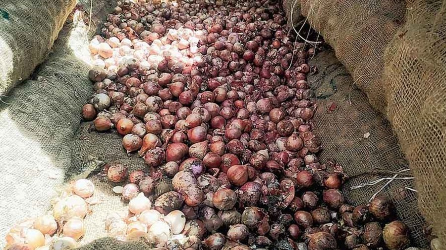 Twenty-five per cent of the onions have already become rotten