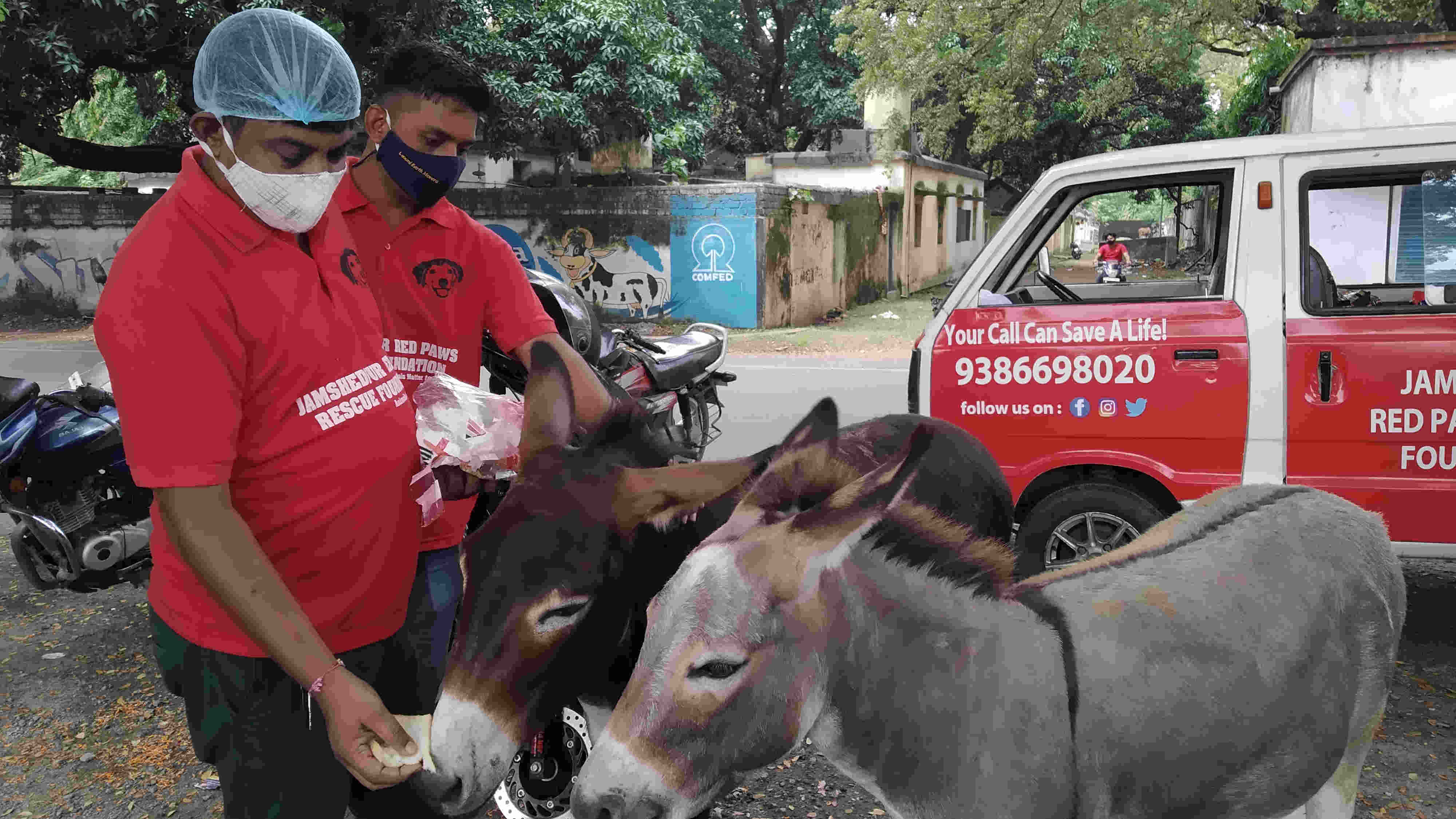 A member of Jamshedpur Red Paws Rescue Foundation feeds a donkey near G Town Ground in Jamshedpur on Sunday.