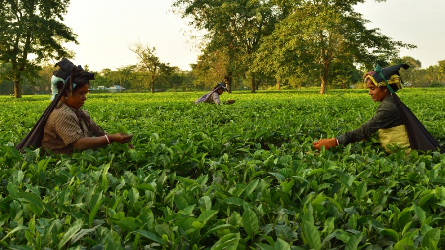 There are, however, no clear indications that the state government has taken a policy decision on granting land rights to tea garden workers, said a source.