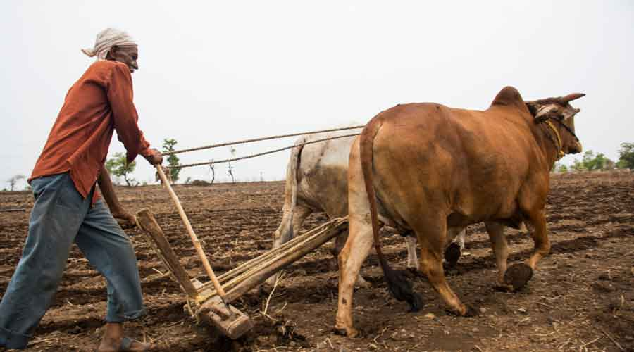 'Nil' cited for farm suicide minus causes