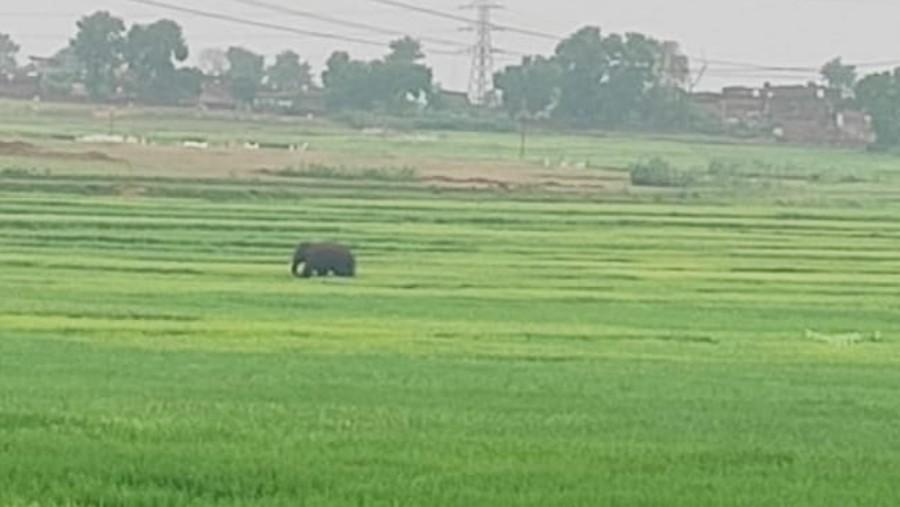The lone elephant when last photographed in Vishnugarh.