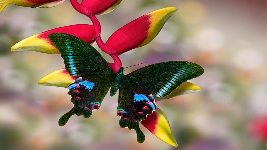 Colours, flying