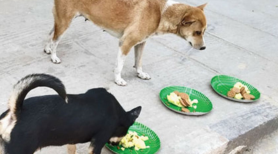 Titas Mukherjee, 29, a resident of Thakurpukur who has been running an NGO since 2016, has been raising funds through social media for sustaining multiple projects of feeding strays and sheltering them.