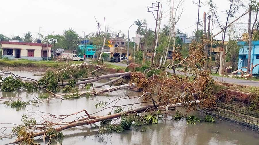 Fallen trees in Haldia bear testimony to the ferocity of Cyclone Amphan in May last year. There is widespread resentment among the electorate over corruption in distribution of Amphan relief. Opposition parties have identified this as a key poll plank to corner Trinamul