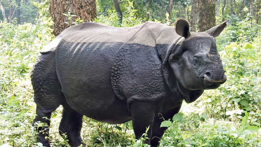 Representational Image. On Sunday, when this rhino carcass was spotted, foresters and the police immediately passed on this information to their counterparts in the Northeast, which swung into action.