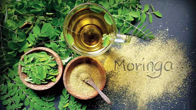 The price of a small bottle of the cold-pressed virgin moringa oil can run into several hundreds of rupees