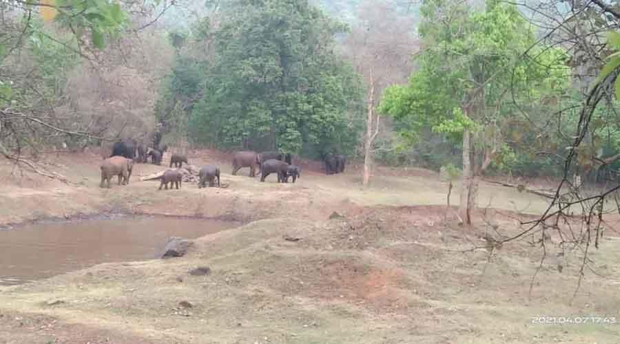 Elephants at Dalma wildlife sanctuary.