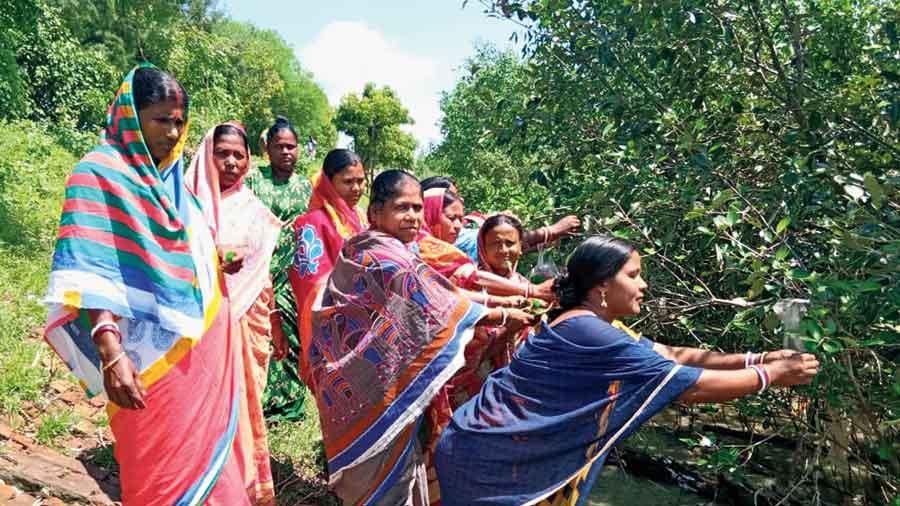Women in the Sunderbans tie rakhis  on mangrove trees on Sunday