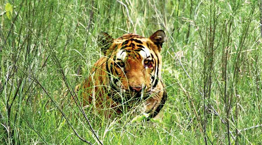 Sources said details about the tiger or how badly it was injured remained unclear.