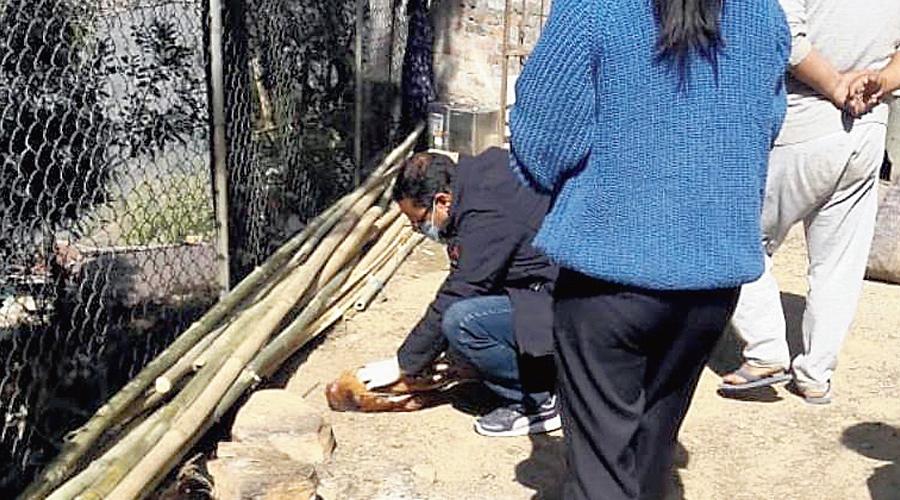 An official checks a dead bird in the Phuguri tea garden on Thursday.