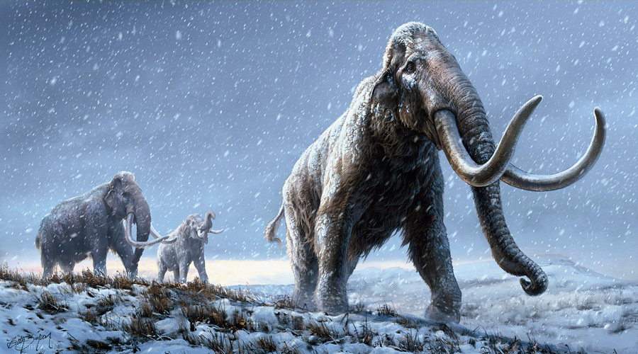 An illustration of a steppe mammoth that preceded the woolly mammoth.