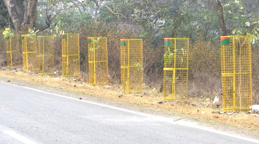 The saplings (guarded with iron cages) planted on the roadside by Dhanbad forest department at Phushbangla-Putki Road in Dhanbad.
