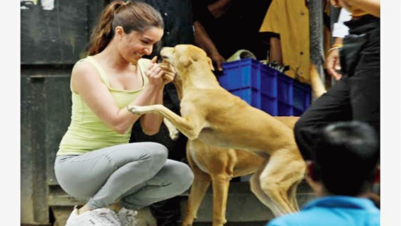 Shraddha Kapoor giving cuddles to an Indie dog