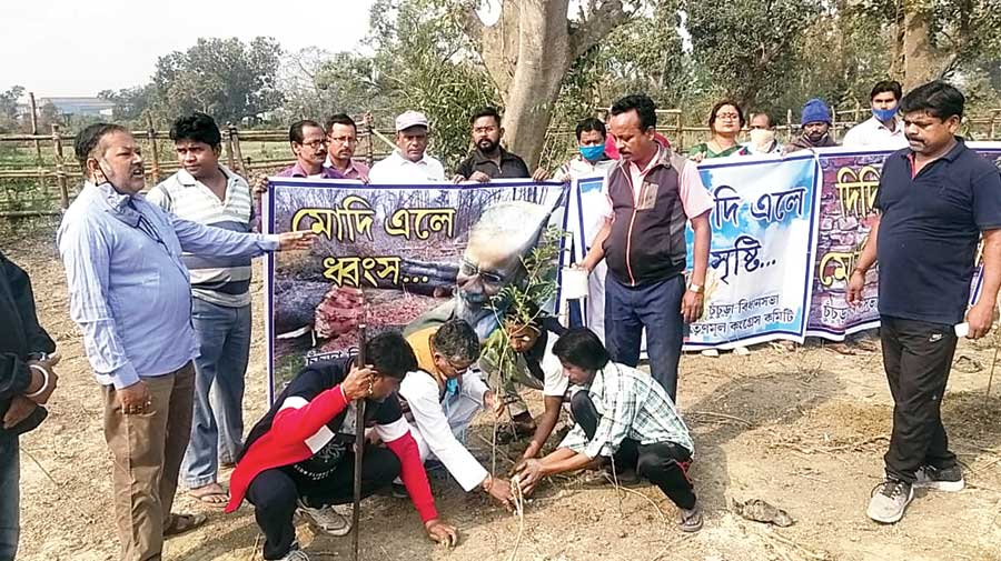 Trinamul leaders and supporters in Hooghly's Sahagunje plant saplings on the grounds of the closed Dunlop tyre factory on Tuesday