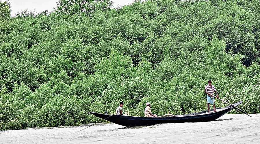 A boat in the Sunderbans