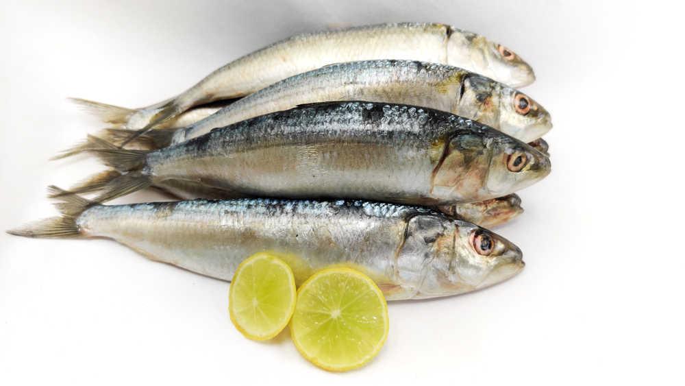 Indian oil sardines (Sardinella longiceps).