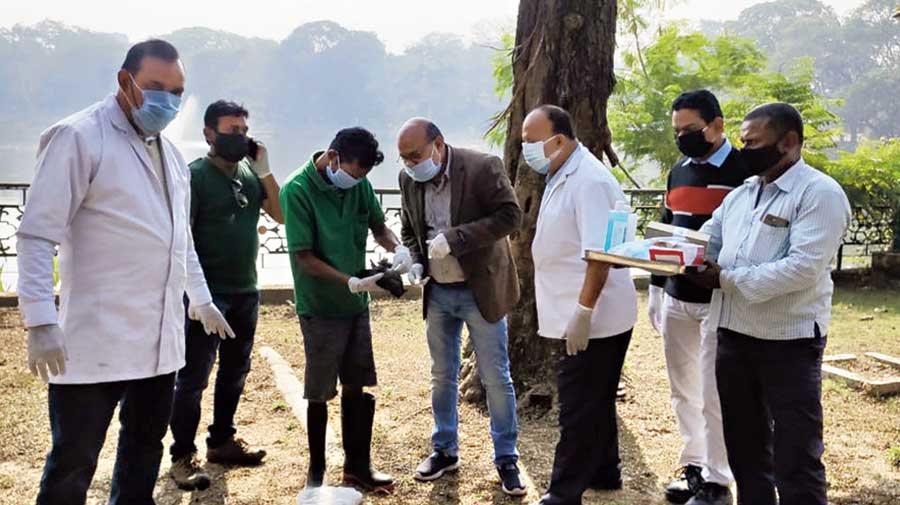 Animal husbandry officials collect samples from crow carcasses at Jubilee Park in Jamshedpur on Thursday.