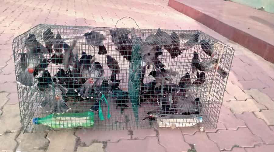 The rescued birds