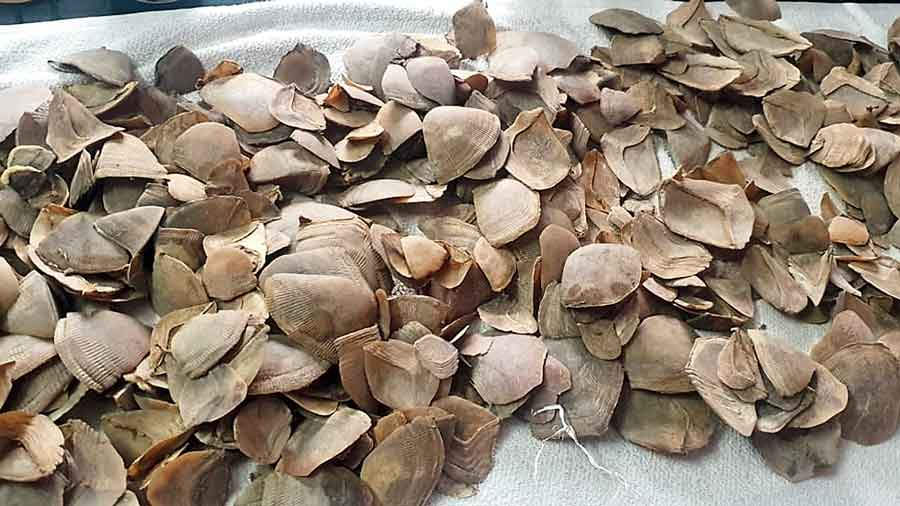 The pangolin scales seized by the forest department.