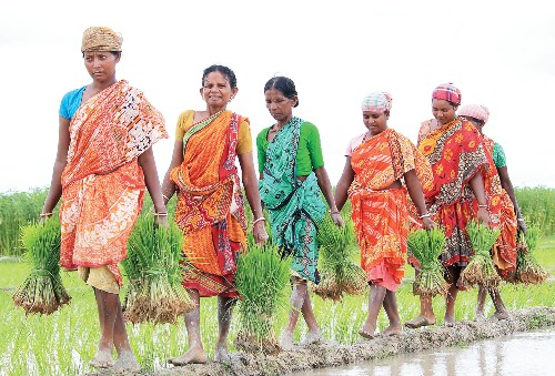 In Bengal, there is a new trend among women farmers