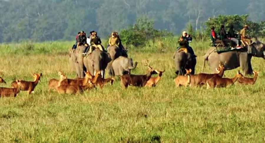 Tourists on an elephant safari at the Kaziranga National Park