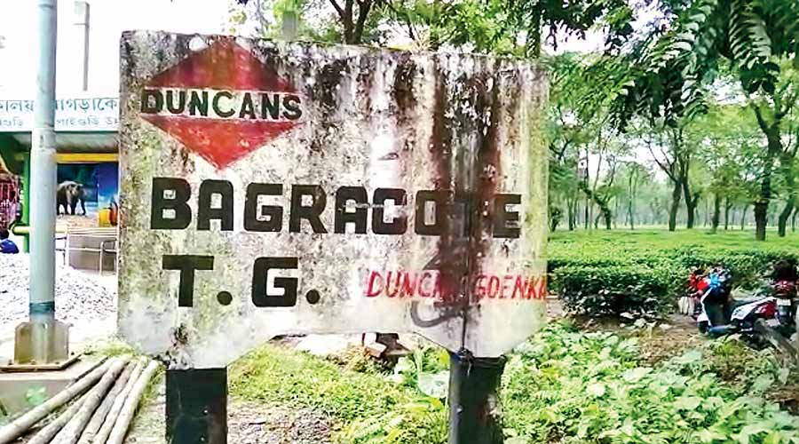 The Duncans management had abandoned the Bagrakote garden in April 2015.